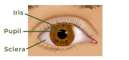 eye anatomy diagram of eye conditions