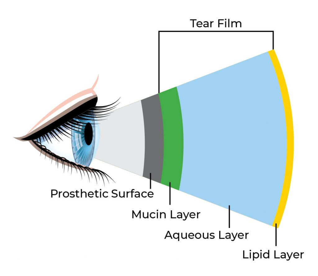 diagram of the tear film, showing various layers